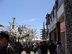桜祭り@サンフランシスコジャパンタウン2009 6