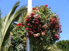 2009 Flowers in Berkeley_ 3