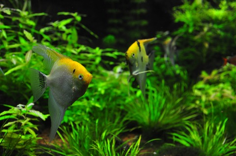 fish-1759839_1920