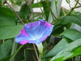 不思議な色が咲いていた