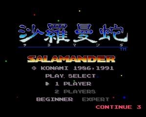 salamander1-2