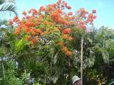 オアフ島 街並みの花