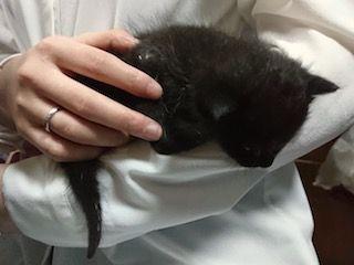 猫_黒いの