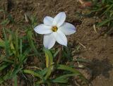 小さい春1
