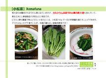 ブログ用小松菜POP