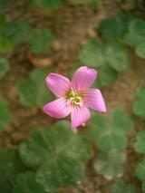 雑草の花2