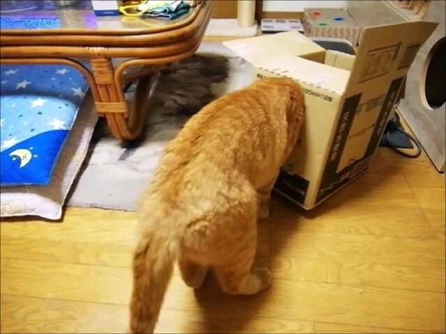 2021.8.25 箱穴に顔ハメ _Moment(3)