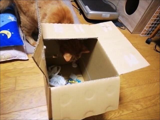 2021.8.25 箱穴に顔ハメ _Moment(4)