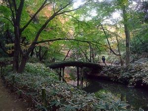 六義園 紅葉絶景ポイント 山陰橋