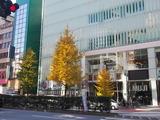 新宿ピカデリー前のイチョウ