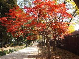 新宿御苑散策路の紅葉
