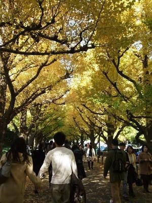 神宮外苑いちょう祭り 2009/11/24