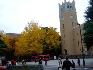 早稲田大学の銀杏