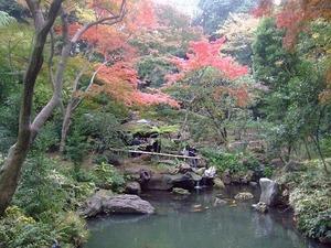 六義園 絶景ポイント 千鳥橋から滝見の茶屋をのぞむ