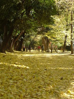 新宿御苑散歩道
