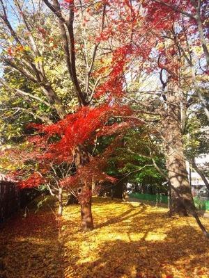 新宿御苑 散策路 2010/12/08