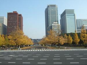 東京駅前の銀杏並木
