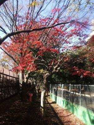 新宿御苑 散策路 2010/12/09