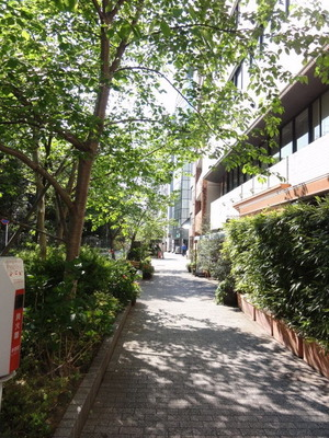 御苑前の道の新緑