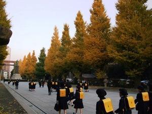 靖国神社の銀杏