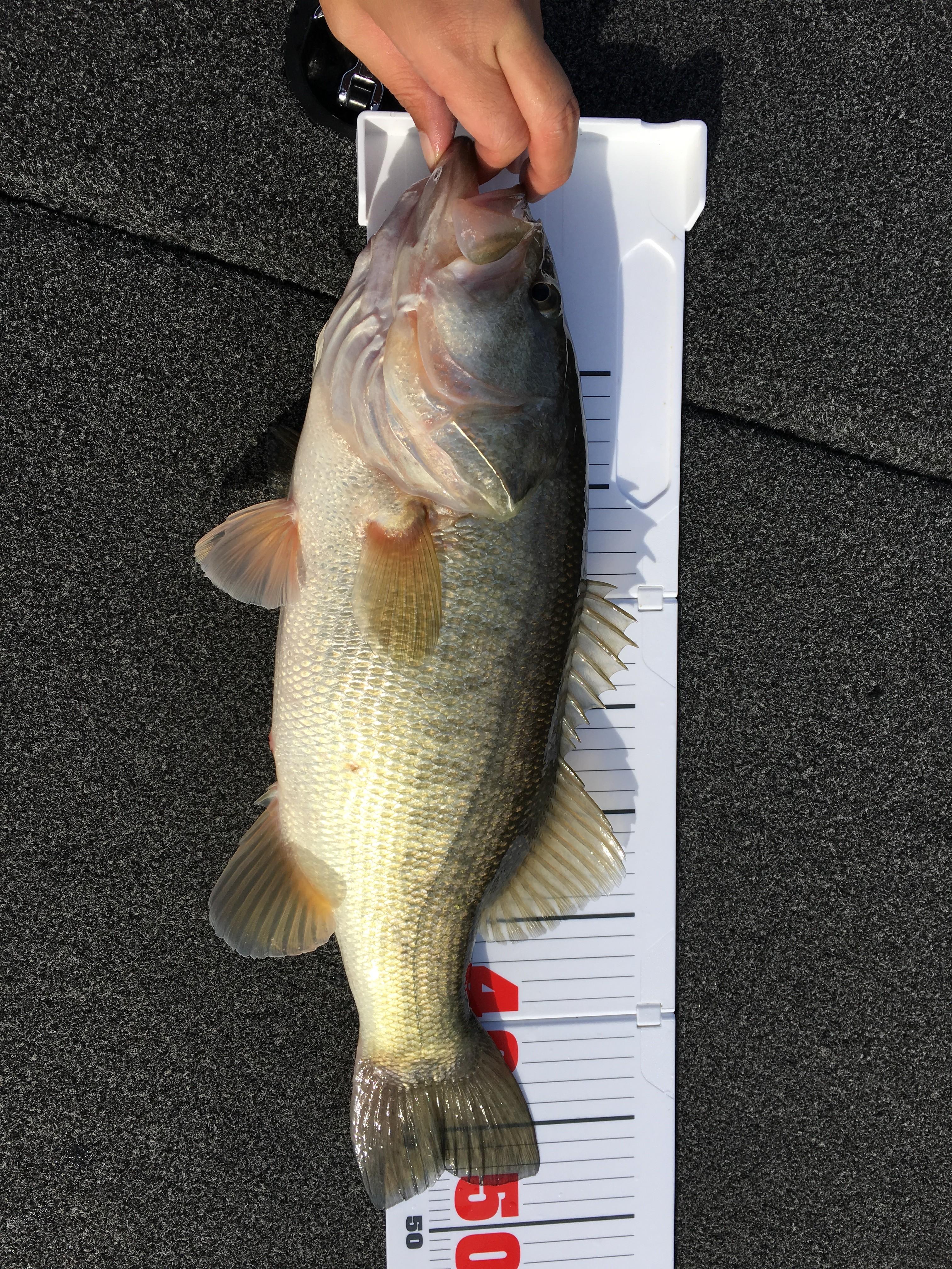 釣ったら】バス釣を撮影して晒せ!70【うp】 [無断転載禁止]©2ch.netYouTube動画>4本 ->画像>549枚