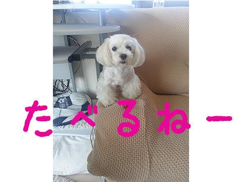 8_30_maha3