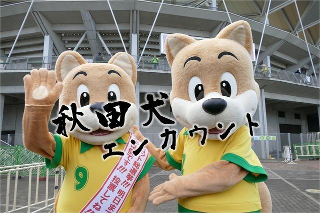 秋田犬エンカウント-s