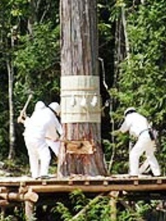 御船代木 伐木の儀