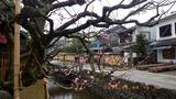 武家屋敷街に咲く梅の花
