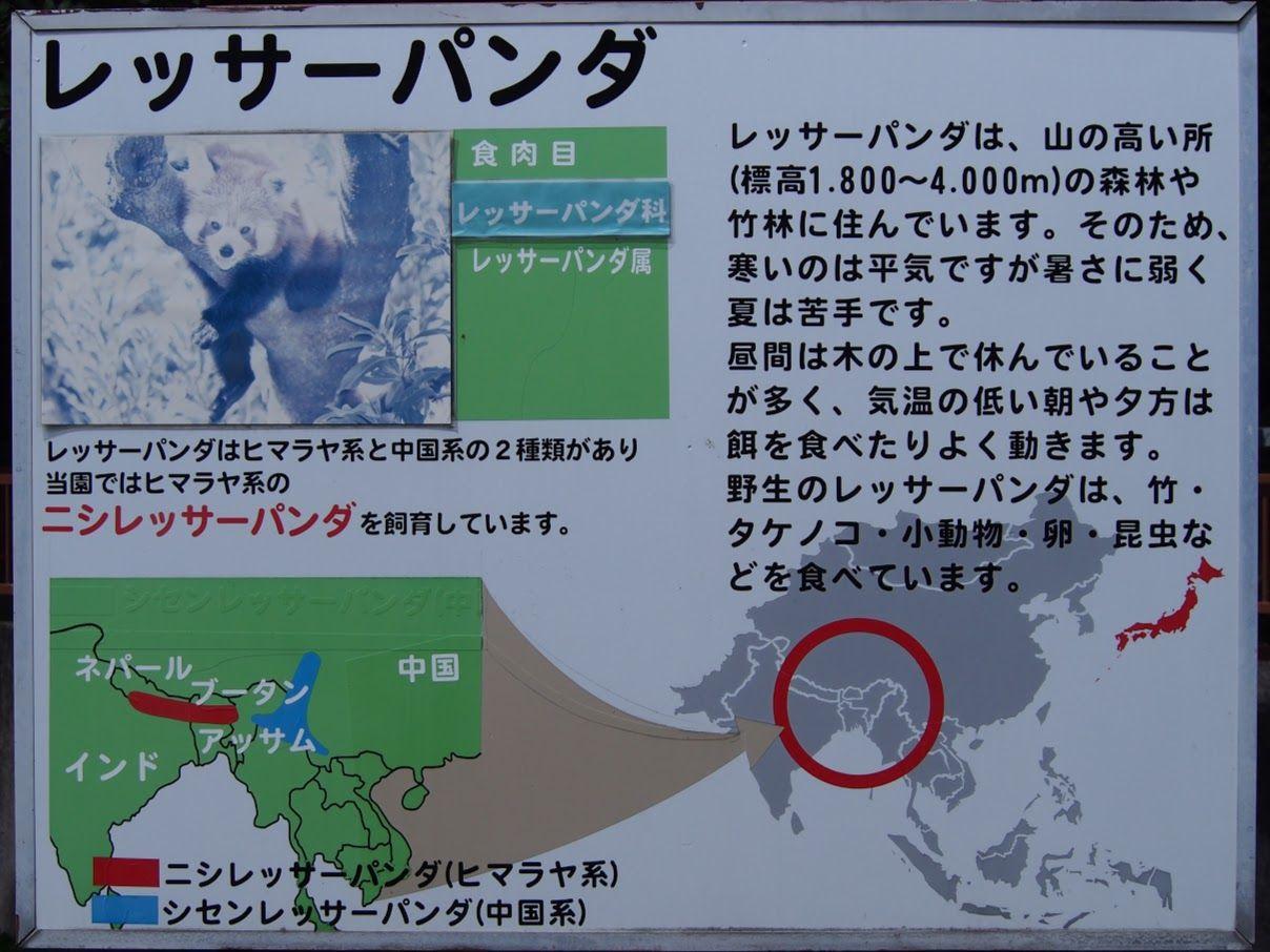 ニシ 飼育 て を し 唯一 動物園 で レッサーパンダ 日本 は いる