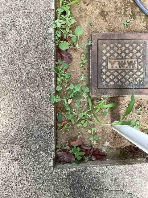 ダイソーの除草剤は本当に効果があるのか検証したその後。