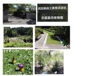 武田薬用植物園