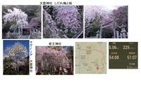 大豊神社・梅と桜