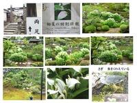 ryosokuin-hangesyo