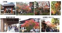 東福寺ー紅葉