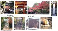 新日吉神社1