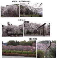 大石神社・隋心院