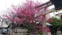 菅大臣神社1