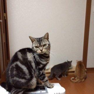5にゃんこ2014313.1