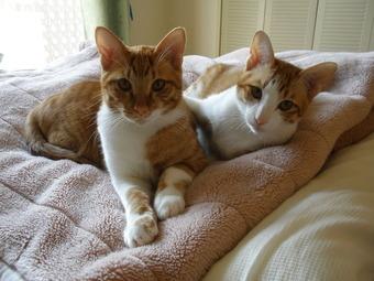 伊豆と猫 069