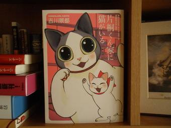 伊豆と猫 002