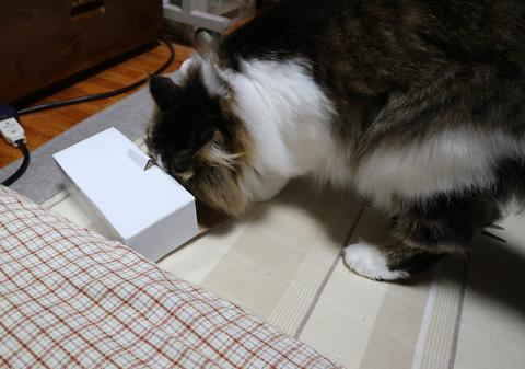 小さい箱と猫