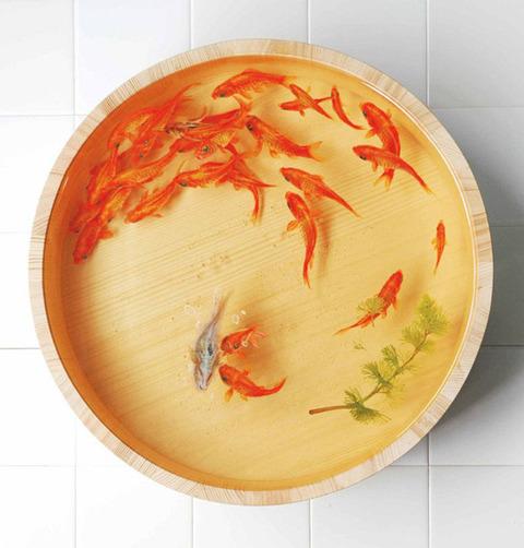 goldfish2-a8f4e