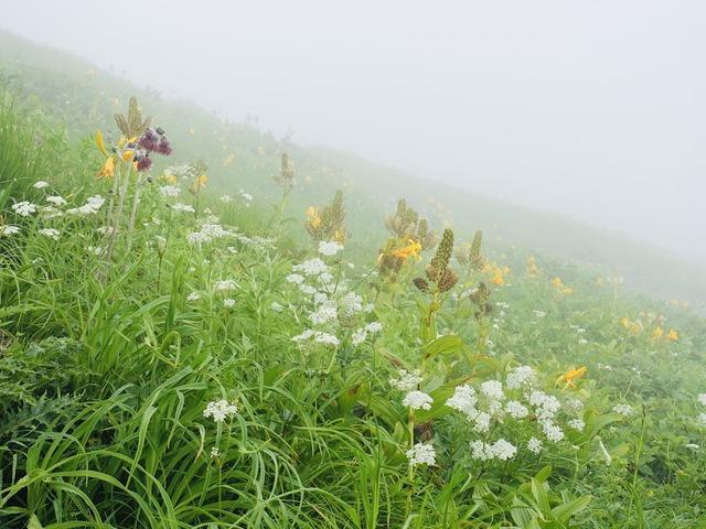 写真02:霧の中、幻想的な花畑。色とりどり百花繚乱。