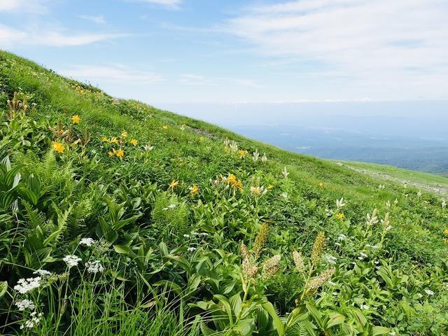 写真10:青空の下の花畑も素敵。今年はコバイケイソウの当たり年。