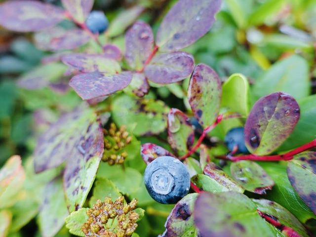 写真10_小さな秋が、あちこちに