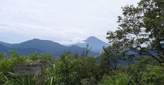 高川山山頂富士山