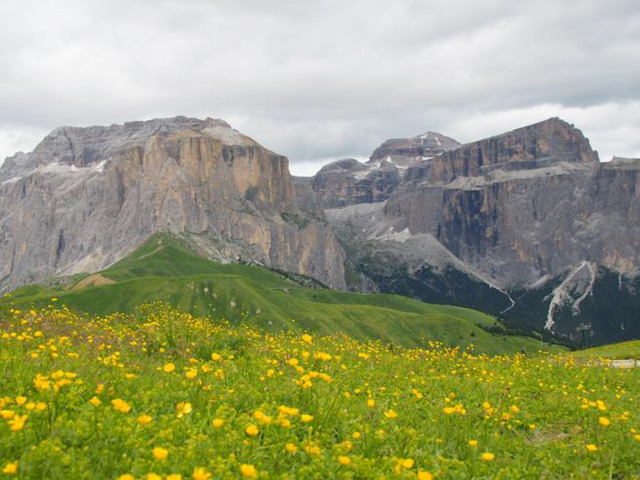 セッラ峠に近づくとお花が増える
