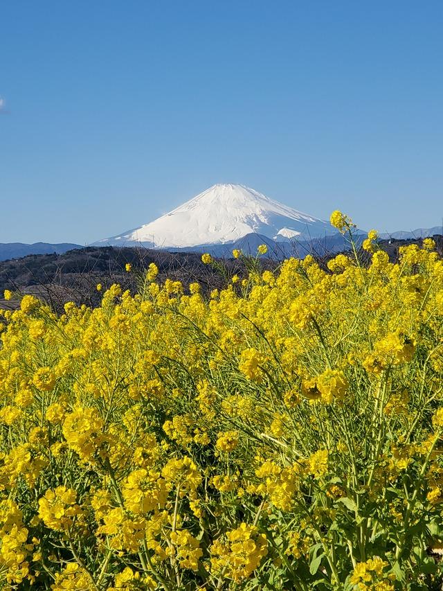 20210130山からの富士山