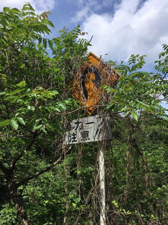蔦が絡んだ標識